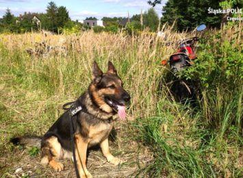 Policyjny pies pomógł odnaleźć skradzione motocykle. Odzyskano 3 z 5 maszyn