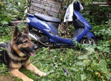 Policyjny pies skuteczny w odszukiwaniu ukradzionych motocykli